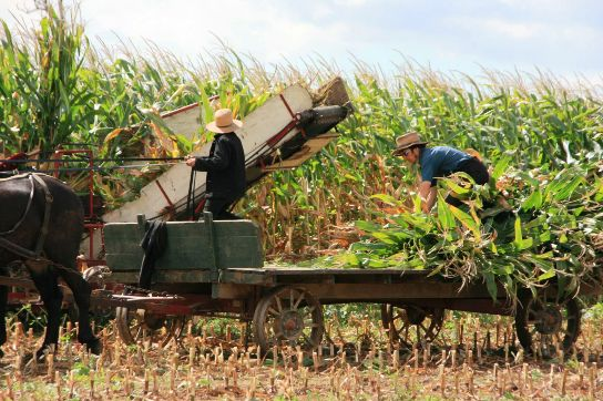 amish-community-farm-work.jpg