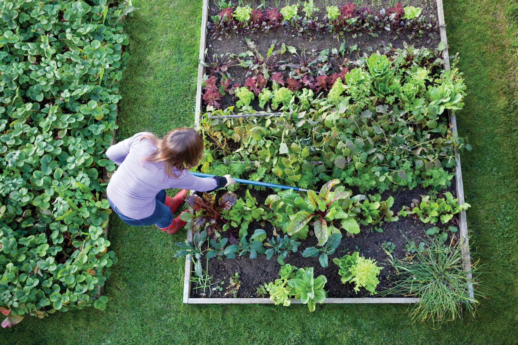 Above View Of Tending Garden Transition Voice