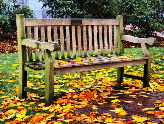 bench with fall leaves