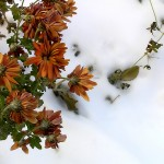 flowers on snow